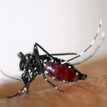 As diseases proliferate, mosquitoes becoming Public Enemy No. 1 – USA TODAY
