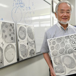 Yoshinori Ohsumi of Japan Wins Nobel Prize in Medicine – New York Times
